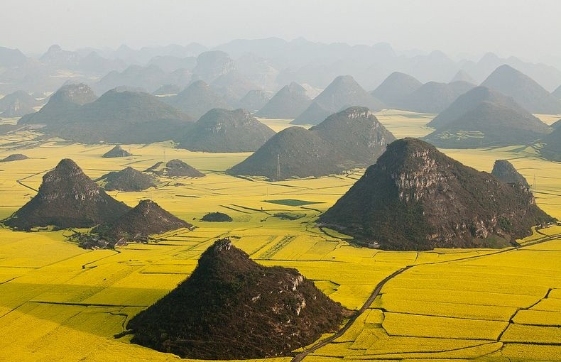 Canola Flower Fields in China